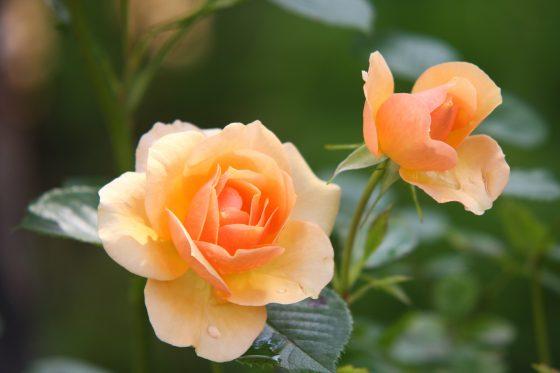 bloemist sevenum