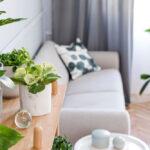 De kunstpalm in huis of tuin