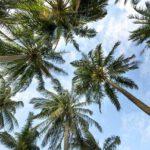Kan ik echt een mini palmboom buiten plaatsen?